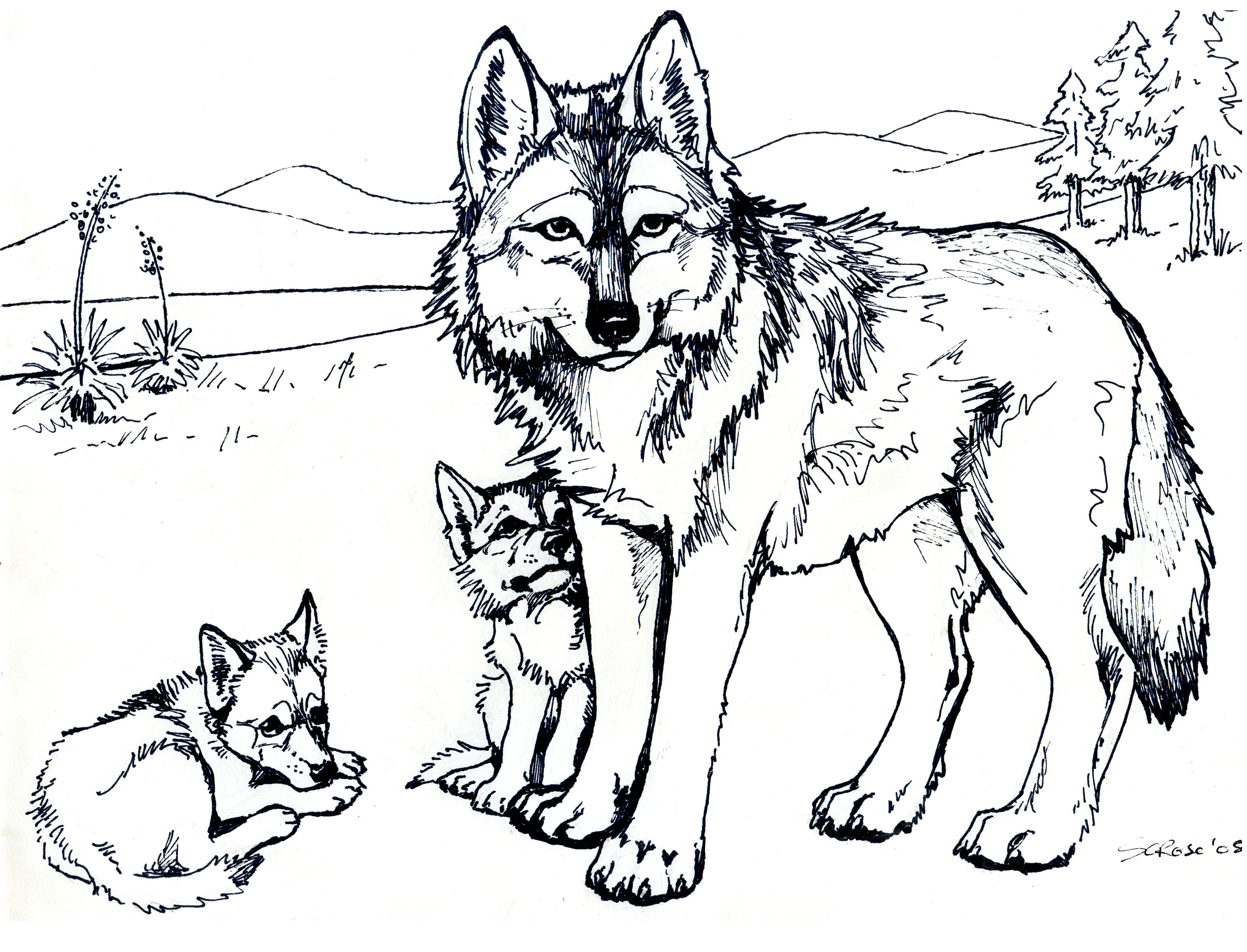 coloring pages wolves mexicanwolves.  Press coloring pages wolves