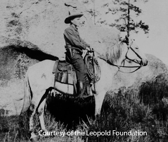 """aldo leopold essay thinking like mountain Aldo leopold was a well-known professor, forester, and naturalist who has been  called the  this ideal is outlined in his essay """"thinking like a mountain."""