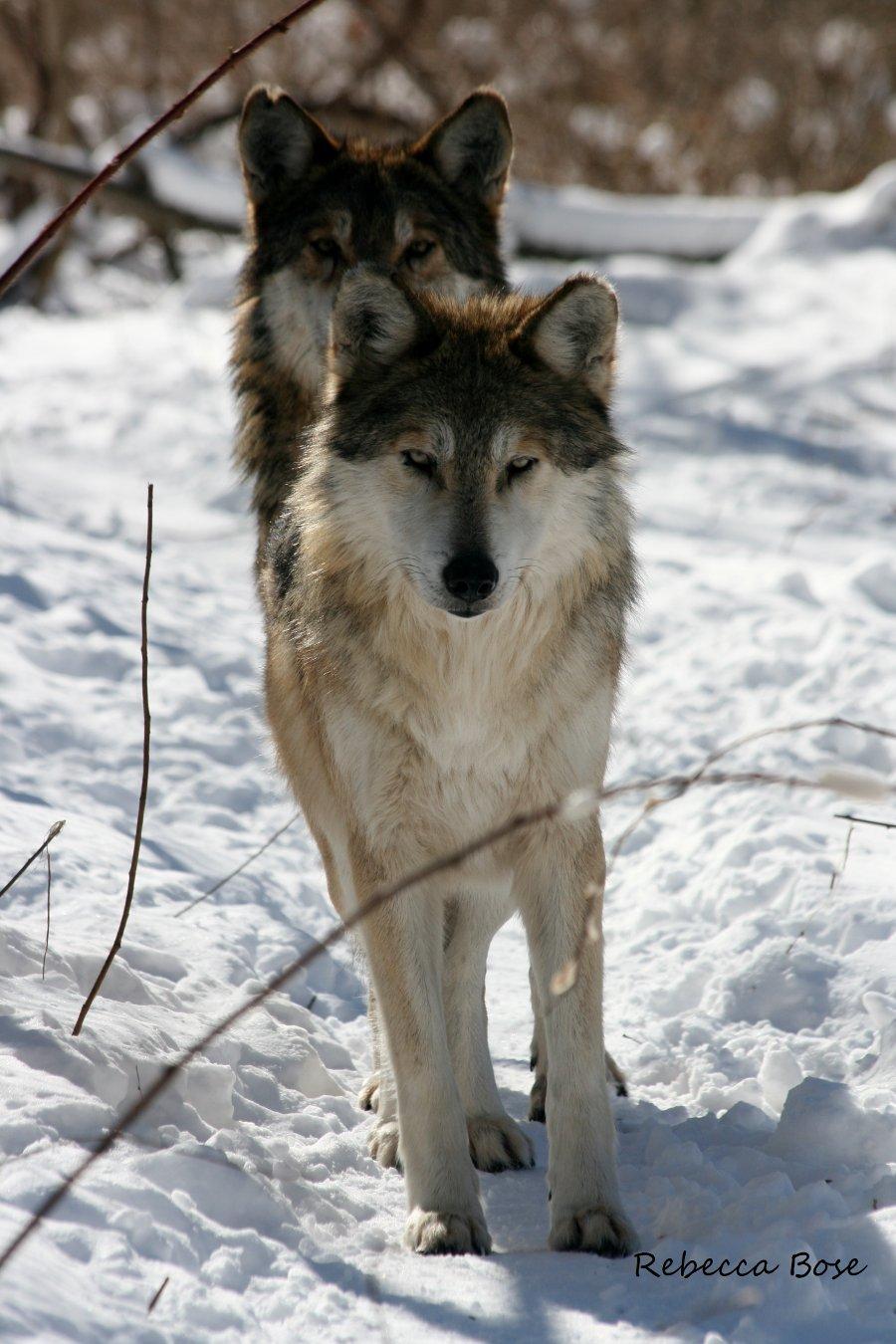 essay extinction of animals
