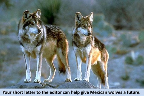 Arizona Daily Sun How To Write Letters To The Editor